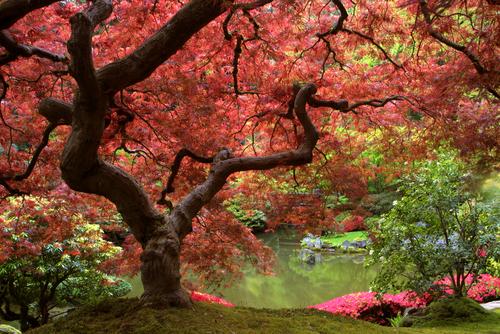 Secret Garden Malaysias most comprehensive Christian