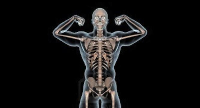 13385873-human-body