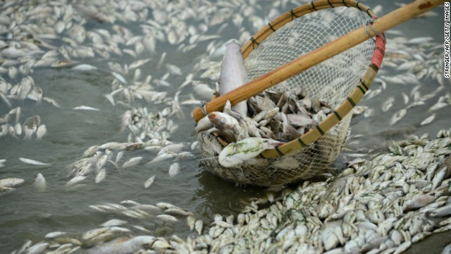 Tons of poisoned fish clog river in Hubei province, China (Reported in CNN Sept 5, 2013)