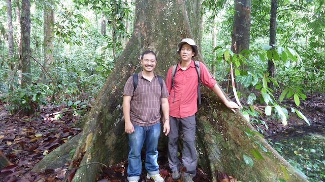 Foo Seng (left) and Ken Yeong (right) with the buttress root