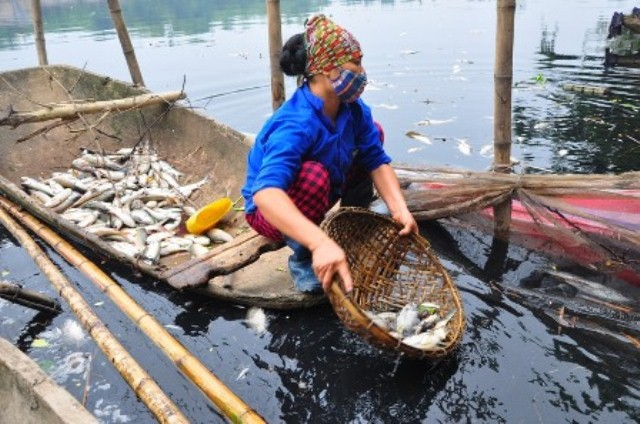 The dead fish covering the sides of Pearl River, Vietnam is causing unbearable stench to the villagers who lived nearby (Reported in Dan Tri News on 16 Oct, 2013)