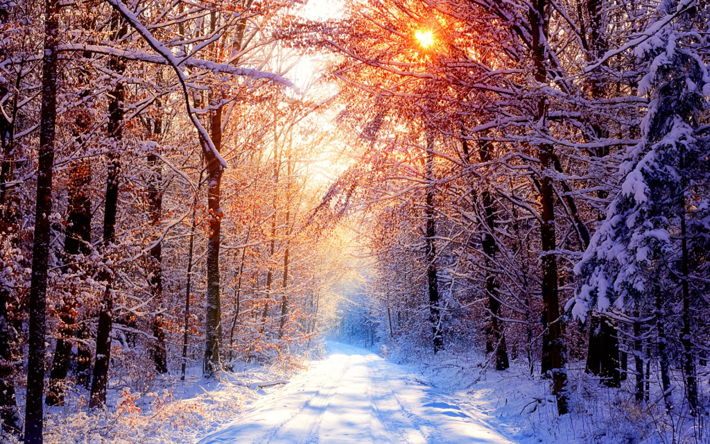 a_road_through_a_snowy_forest_with_the_surrounding_trees_illuminated_by_beautiful_golden_sunlight.1920x1200.d5c1ee87