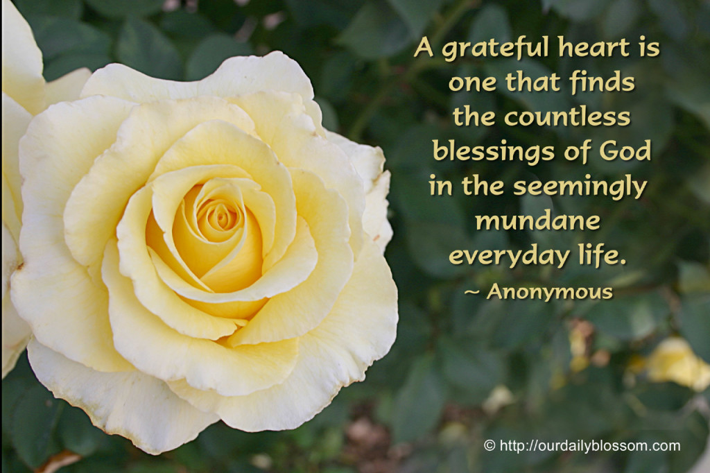 grateful heart rose