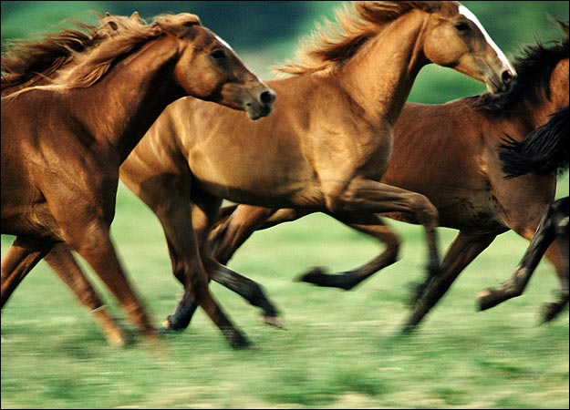 horse-picture