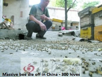 bee-deaths-china