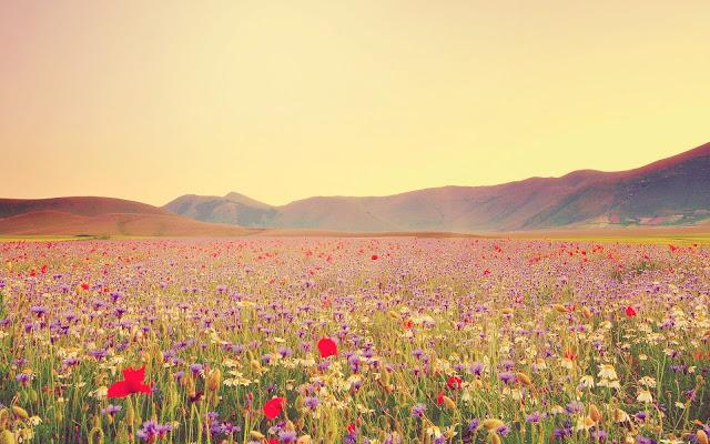 sunny-field-of-beautiful-wildflowers-237264