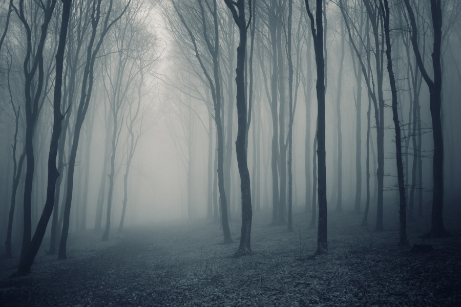 Grey-Mist-Forest-Mural-Wallpaper
