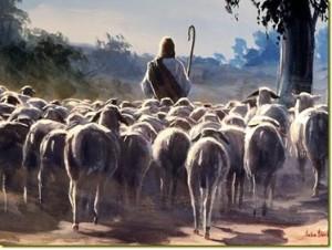 sheepfollowing