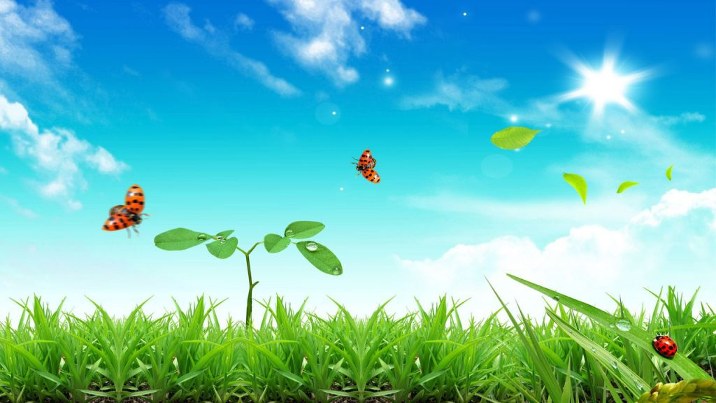 butterflies-and-ladybug-in-the-grass-7454