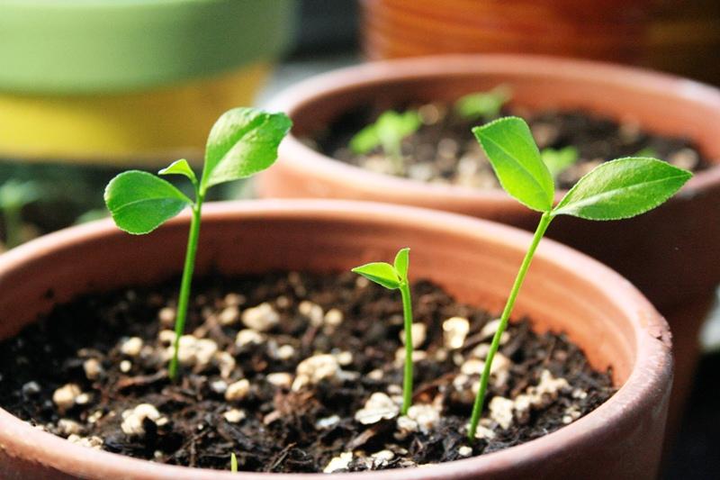 Ref: growingwildceeds