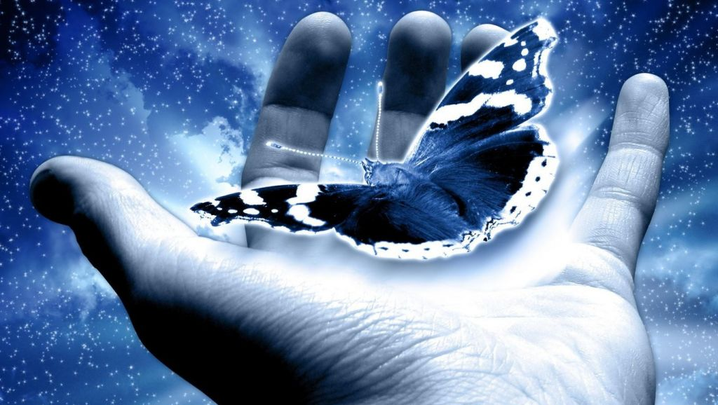 Butterfly_in_my_Hand_Wallpaper_w6zco