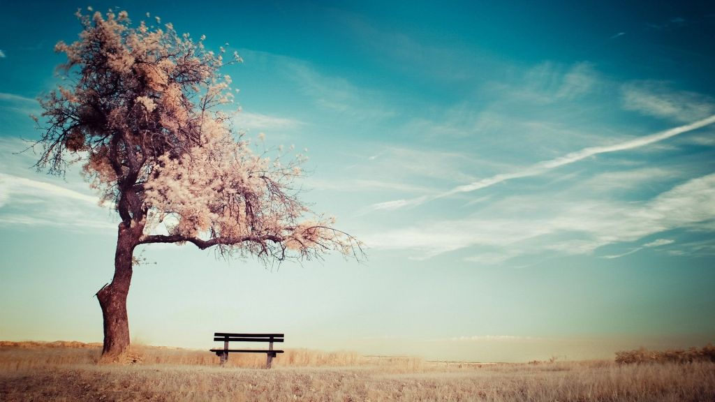 cherry-blossoms-tree-bench-nature-1920x1080
