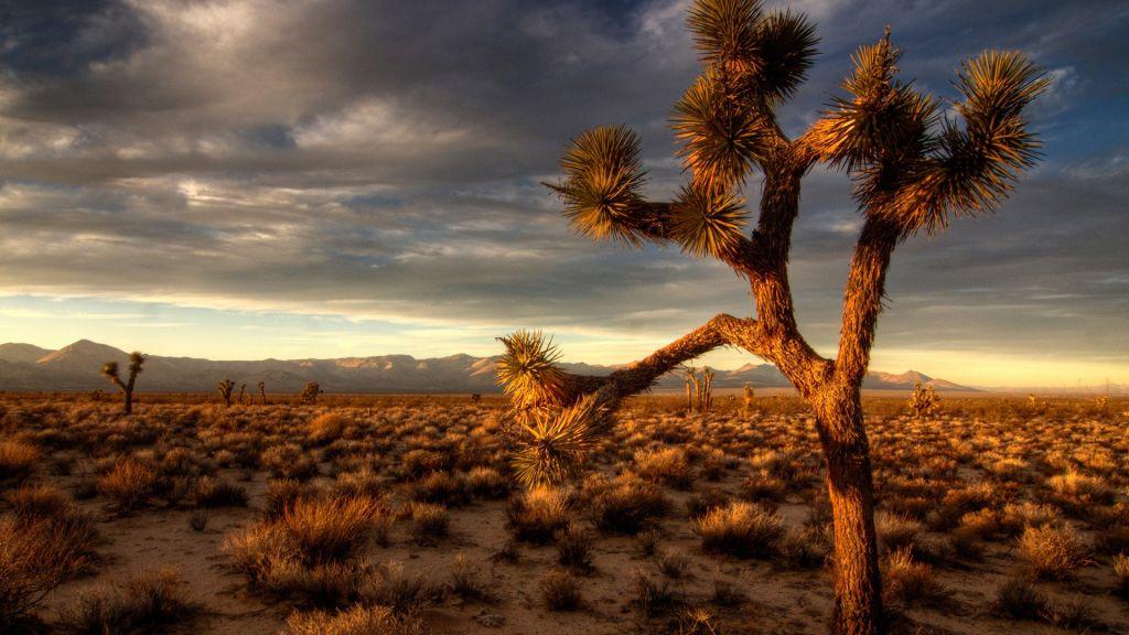desert-plants