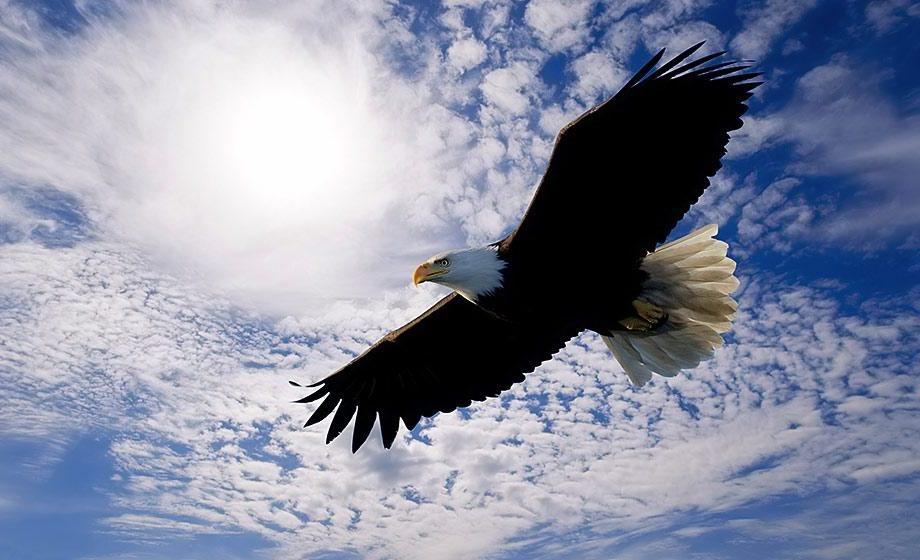 soar like eagle