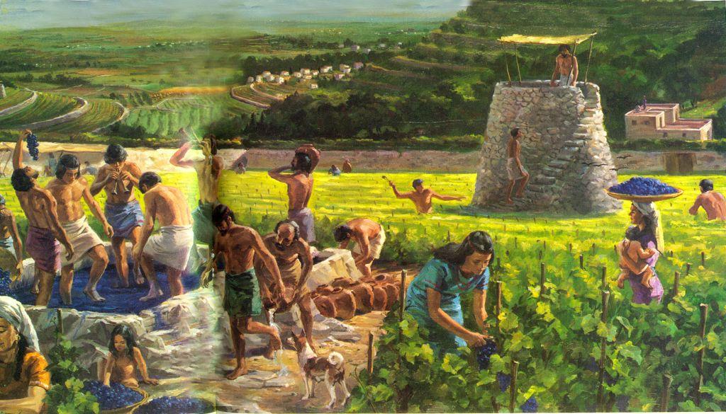 Grape Harvest1 (1)