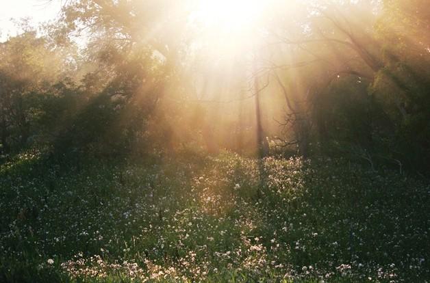 Ref: threelittlewildflowers