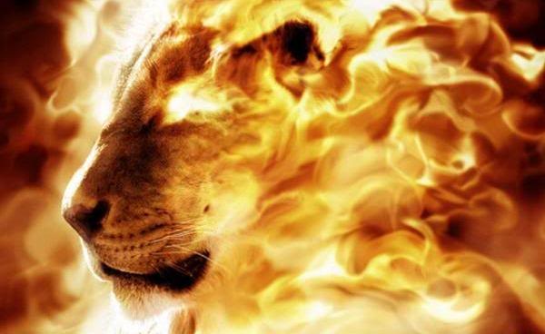 the Lion of the tribe of Judah, Jesus Christ (Revelation 5:5)   Ref: jrforasteros