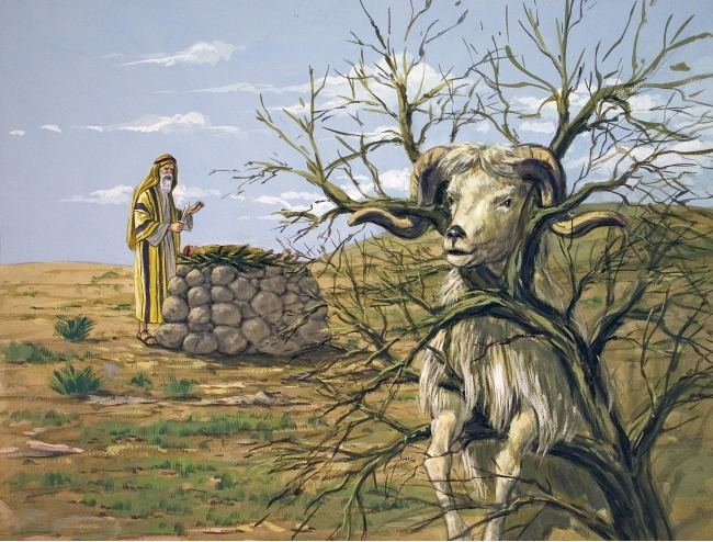The ram that God provided for Abraham to sacrifice instead of Isaac. Ref: biblelessonsite
