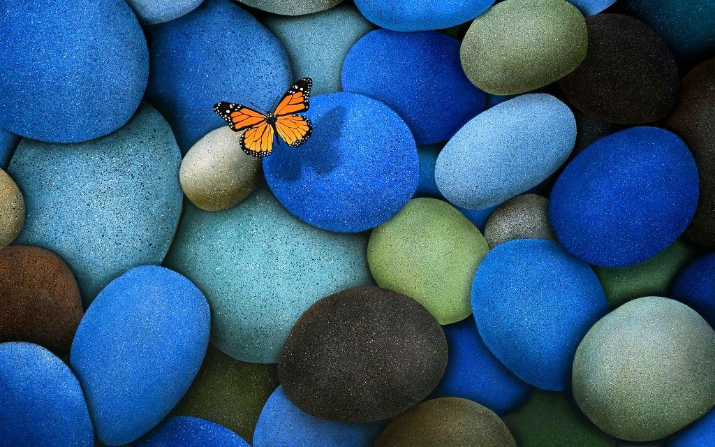 butterfly-wallpaper_093549561_256